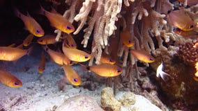 Tropische Fische stock video