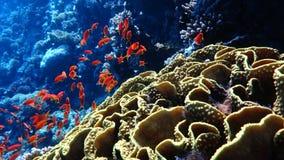 Tropische Fische stock footage