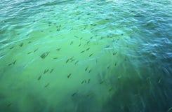 Tropische Fische im Wasser Stockbild