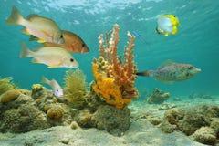 Tropische Fische und bunte Seeschwämme Lizenzfreie Stockfotografie
