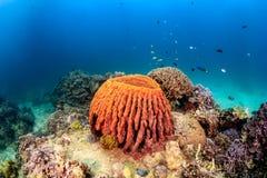 Tropische Fische und ein großer Schwamm auf einem tropischen Korallenriff Stockbild