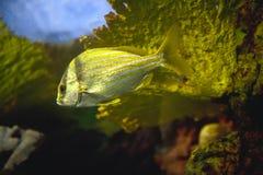 Tropische Fische und Koralle Lizenzfreies Stockbild