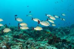 Tropische Fische und Korallenriff Stockfotos