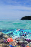 Tropische Fische und Meer Lizenzfreie Stockfotos