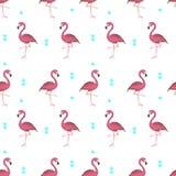 Tropische Flamingos Lizenzfreies Stockbild