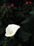 Tropische flora donkere achtergrond Royalty-vrije Stock Afbeeldingen