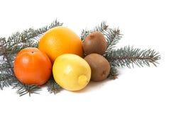 Tropische Früchte und Zweig der Tanne. Lizenzfreie Stockfotografie