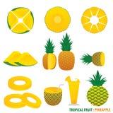Tropische Frucht-Ananas-Vektor Lizenzfreie Stockfotografie