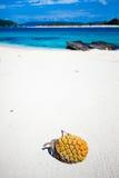 Tropische Frucht auf dem verlassenen weißen Strand Lizenzfreies Stockbild