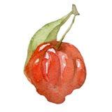 Tropische Frucht des Aquarells nannte auch Pitangahand gezeichnet Lizenzfreies Stockbild