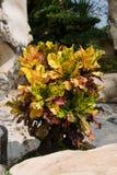 Tropische gardeni n Thailand Stock Fotografie