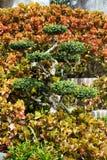 Tropische gardeni n Thailand Stock Foto's