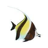 Tropische geïsoleerde vissen Stock Fotografie