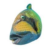 Tropische geïsoleerde vissen Stock Foto