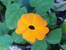 Tropische gelbe Blume Lizenzfreie Stockfotografie