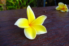 Tropische gelbe Blume auf Schreibtisch Stockfotos