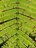 Tropische Gemüseanlage Stockbilder