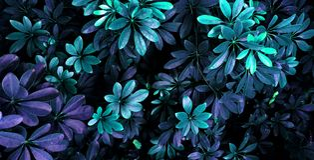 Tropische glühende Blätter lizenzfreie stockfotos