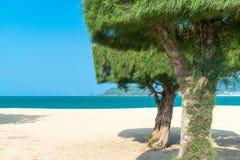 Tropische grüne getrimmte Bäume auf Strand mit Ozean im Sonnenlicht stockbilder