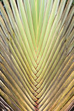 Tropische Grünpflanze Muster für Beschaffenheitshintergrund Lizenzfreie Stockfotografie