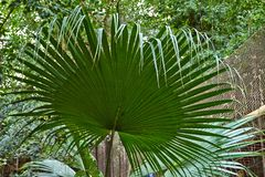 Tropische Gr?n-Bl?tter stockfoto
