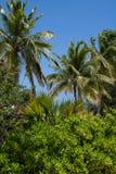 Tropische Groen royalty-vrije stock foto's