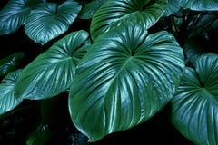Tropische groene bladachtergrond De achtergrond van de bladtextuur Stock Foto