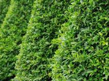 Tropische groene bomen Stock Afbeelding