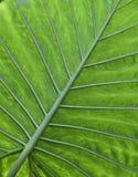 Tropische groene de textuurachtergrond van het bladdetail Stock Afbeelding