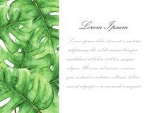 Tropische Groene monsterabladeren met ruimte voor tekst vector illustratie