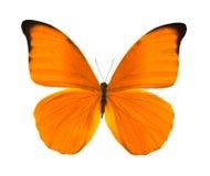 Tropische heldere oranje vlinder Stock Afbeelding
