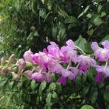 Tropische heldere, zoete, purper-roze orchidee royalty-vrije stock afbeelding