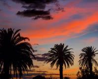 Tropische hemelen Stock Afbeelding
