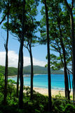 Tropische hohe Bäume Lizenzfreies Stockbild