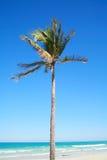 Tropische Insel Lizenzfreie Stockbilder