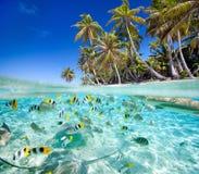 Tropische Insel oben und Unterwasser Stockfotos