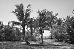 Tropische Insel in Schwarzweiss Lizenzfreies Stockbild