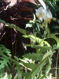 tropische installatie stock afbeelding