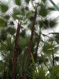Tropische Installatie Stock Foto