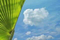 Tropische installatie en blauwe hemel Royalty-vrije Stock Afbeelding