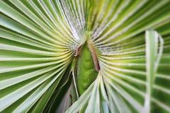 Tropische installatie (macro) Royalty-vrije Stock Foto's