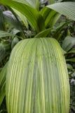 Tropische installatie met groot groen blad stock foto's