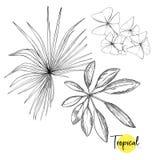 Tropische Installatie Vectorillustratie in Botanische stijl stock illustratie