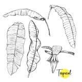 Tropische Installatie Vectorillustratie in Botanische stijl royalty-vrije illustratie