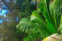 Tropische installaties Royalty-vrije Stock Foto