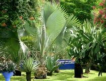 Tropische installaties Royalty-vrije Stock Foto's