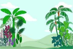 Tropische installaties Stock Afbeelding