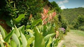 Tropische installaties bij een oude ommuurde botanische tuin stock video