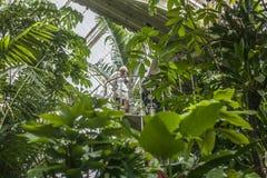 Tropische installaties bij Kew-Tuinen stock fotografie