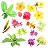 Tropische installaties en bloemen Royalty-vrije Stock Foto